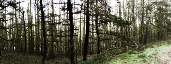 Trees around Fernilee Reservoir
