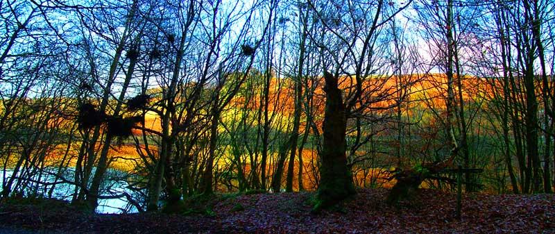 Trees around Fernilee Reservoir Goyt Valley
