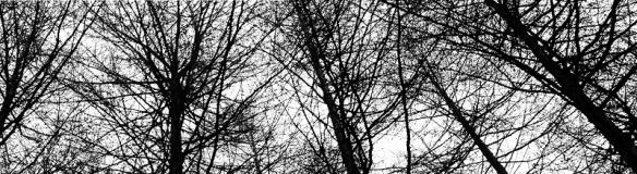 Goyt Valley Treetops