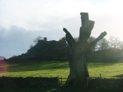 Dead Tree - looking towards Robin Hood's Stride