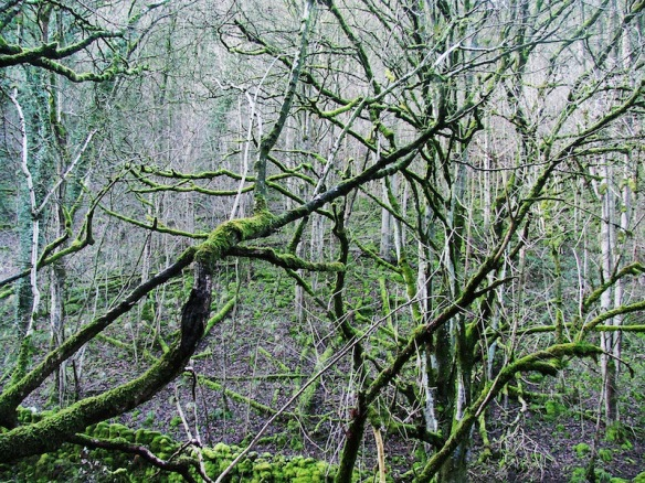 mossy-branches800
