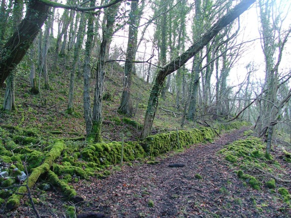 mud-moss-ravensdale800