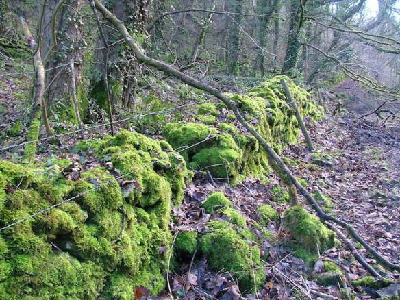 Drystone walls covered in thick moss