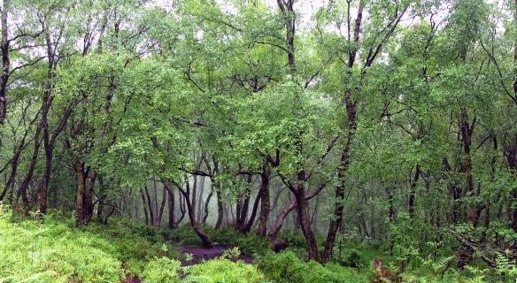 Misty, muddy Woods