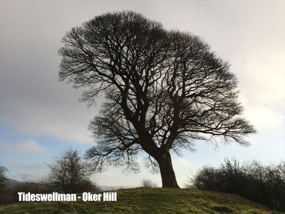 oker-hill-tree.jpg